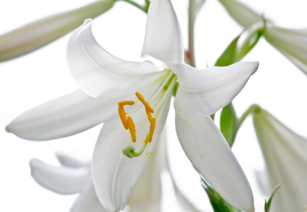 白の花束ユリ