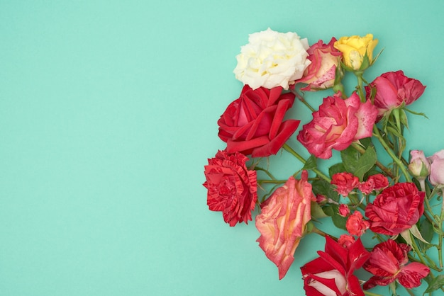 Bouquet of multi-colored blooming roses on a green background, festive backdrop