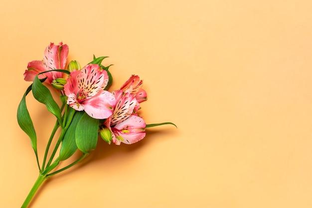 ベージュで分離されたアルストロメリアの花の花束