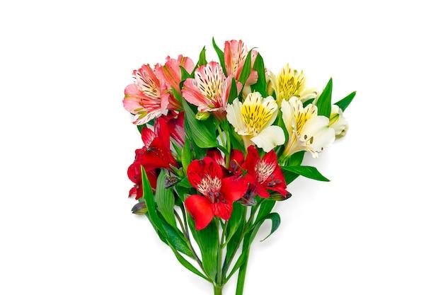 白で隔離されるアルストロメリアの花の花束
