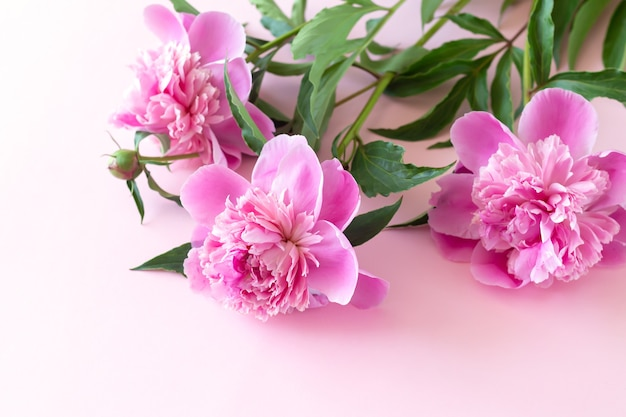 복사 공간이 있는 밝은 분홍색 테이블에 아름다운 분홍색 모란 꽃 꽃다발
