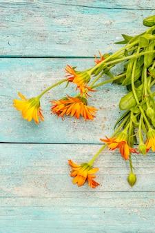 咲くキンセンカの花束。お茶の健康成分、代替医療
