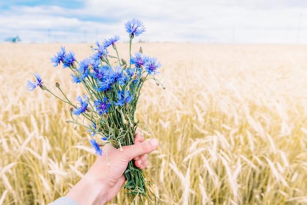 Букет синих васильков на фоне летнего поля. травяные полевые цветы. символ беларуси