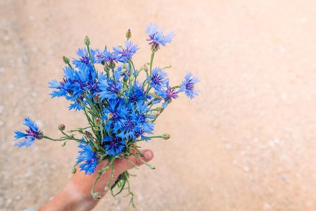 여름 필드 배경에 파란색 cornflowers의 꽃다발입니다. 허벌 필드 꽃. 벨로루시의 상징