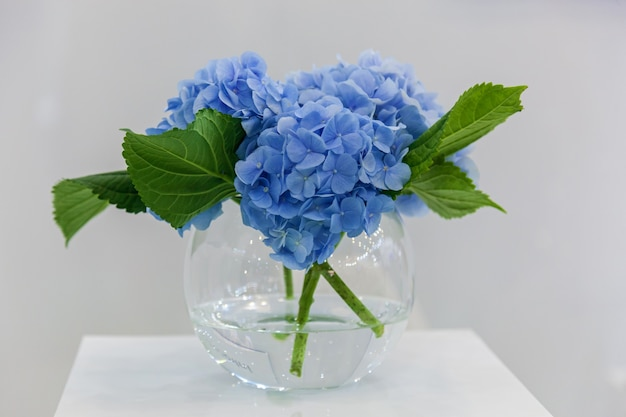 받침대에 꽃병에 푸른 수국 꽃의 꽃다발