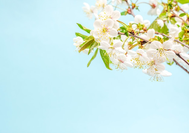 開花桜の装飾コンセプトの枝の花束