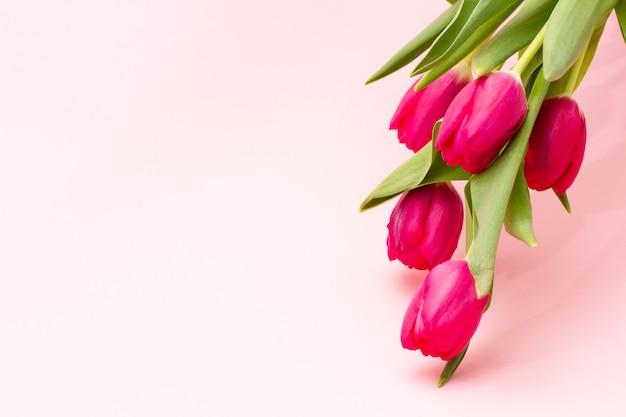 파스텔 배경 복사 공간에 매달려 밝은 신선한 섬세 한 핑크 튤립 꽃다발 클로즈업. 봄 방학을위한 미니멀리즘