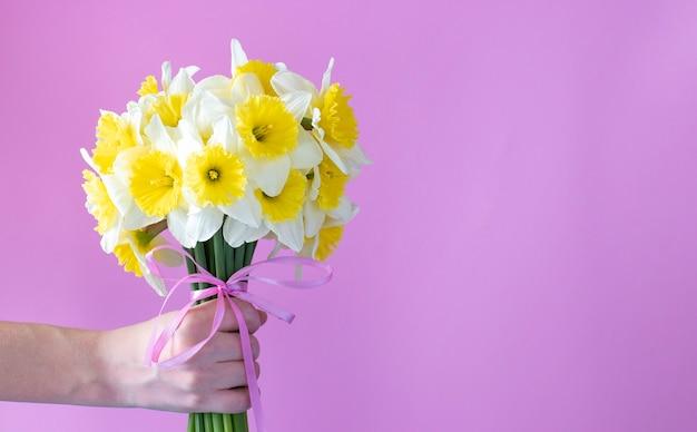 Букет ярких желто-белых нарциссов в женской руке на розовой поверхности