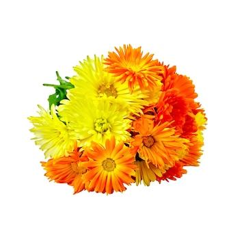 白い背景で隔離キンセンカの花の花束