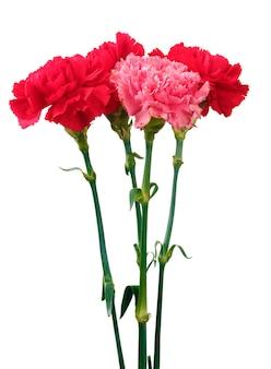白のカーネーションの花束