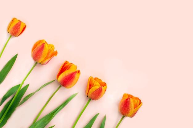 Букет цветных весенних тюльпанов на светлом столе