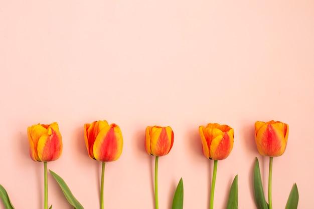 ピンクの背景に色の春のチューリップの花束。春の花。イースター、バレンタイン、3月8日、お誕生日おめでとう、休日のコンセプト。コピースペース