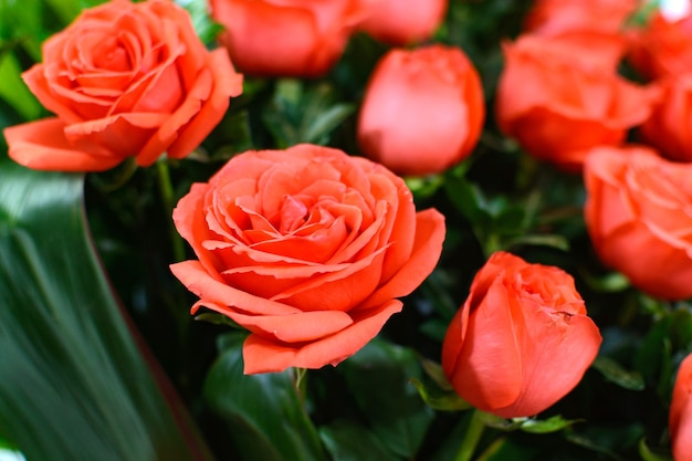화려한 장미 꽃다발 아름다운 꽃꽂이