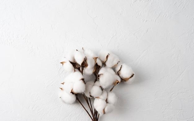 흰색 배경에 면화 꽃 가지 꽃다발, 위쪽 보기, 평평한 레이아웃, 텍스트 공간