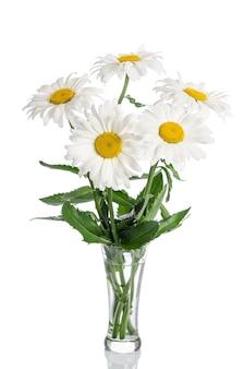 白い背景の上のガラスの花瓶のヒナギクの花束