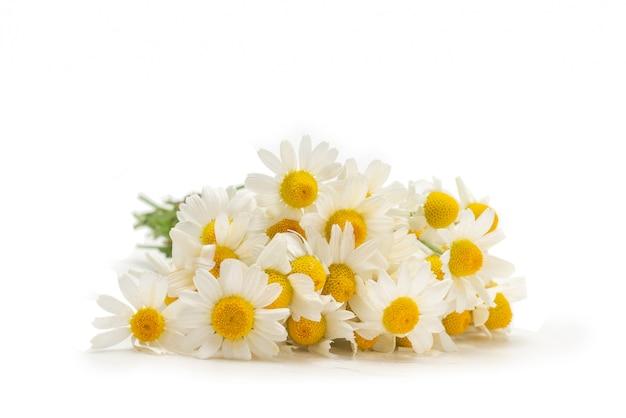 白で隔離されるヒナギクの花束。