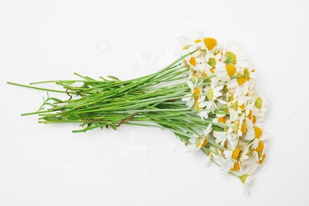 白で隔離されるヒナギクの花束