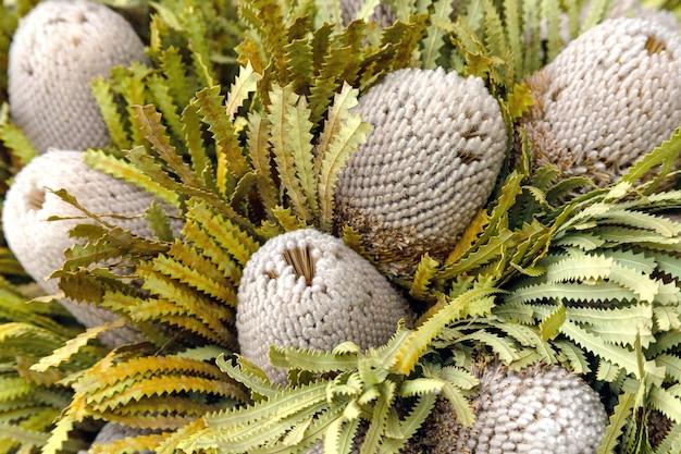 말린 된 protea 꽃의 꽃다발, 평면도