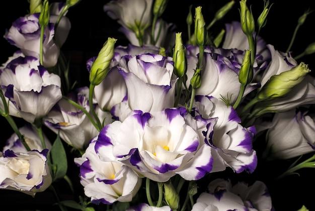 暗い背景にトルコギキョウの花の花束