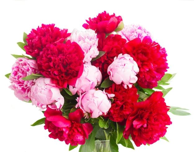Букет из свежих розовых и красных пионов крупным планом на белом