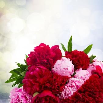 Букет из свежих розовых и красных пионов крупным планом на сером боке