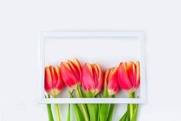 新鮮な赤いチューリップの花と白い背景の上のギフトボックスの花束。