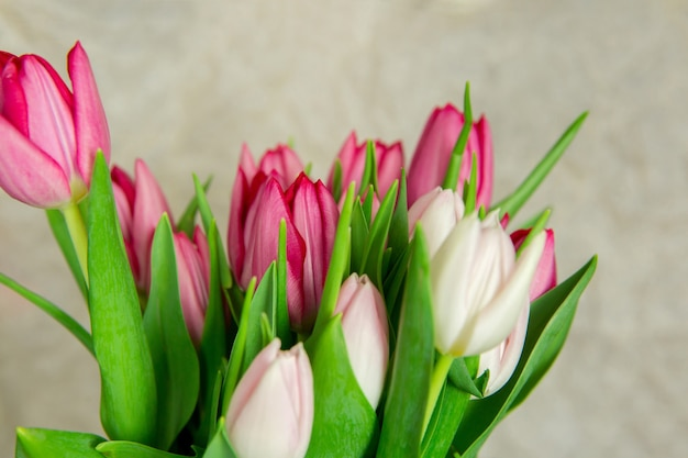 Букет из свежих тюльпанов на бежевом фоне
