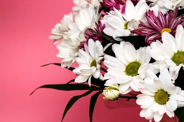 ピンクの背景に新鮮な白いカモミール菊の花束