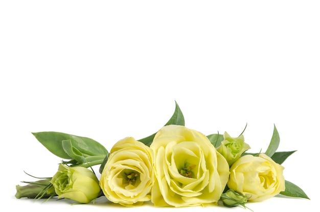 横たわっている緑のバラの花束