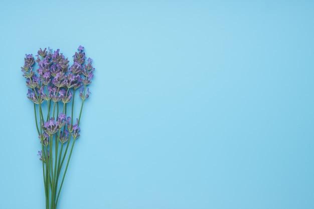 Букет цветов лаванды на синем столе