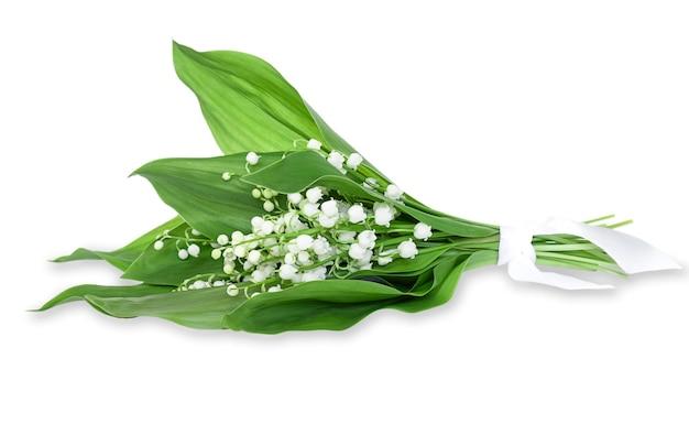 고립 된 녹색 잎 계곡의 백합 꽃다발.
