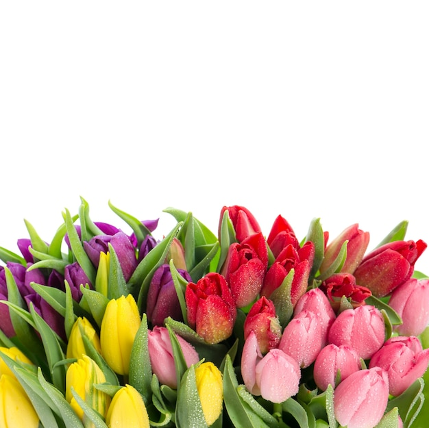 Букет из разноцветных тюльпанов. свежие весенние цветы с каплями воды