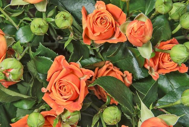 緑の葉の背景にオレンジ色のバラの花束