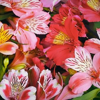Букет из орхидей красивый, свежий, ярко-красные, желтые, сиреневые настенные цветы. цветки крупные, сочные, ароматные.
