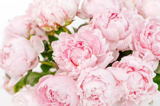 Букет из бледно-розовых цветущих пионов на белом фоне