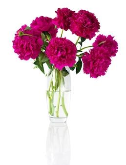 白で隔離の花瓶の牡丹の花束