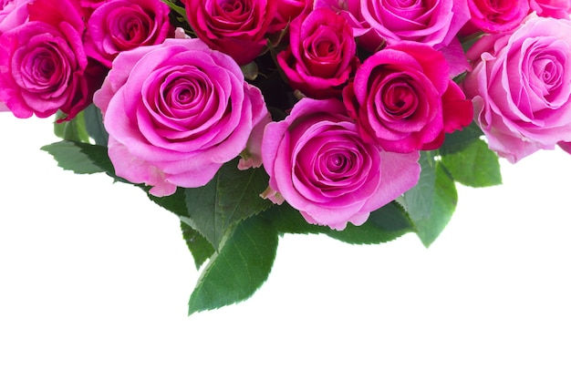 ピンクとマゼンタの新鮮なバラの花束と白い背景で隔離の境界線を残します