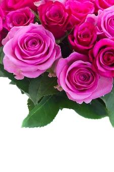 ピンクとマゼンタの新鮮なバラと葉の花束は、白い背景で隔離の境界線を閉じる