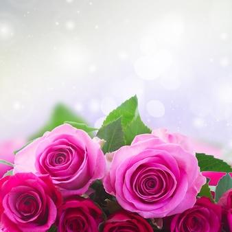 ピンクとマゼンタのバラの花束の白い背景で隔離のクローズアップボーダー