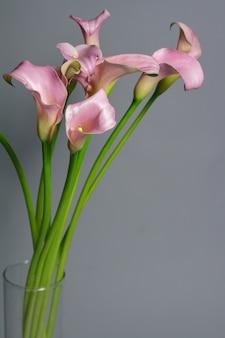 유리 꽃병, 인사말 또는 선물 개념에 핑크 칼라 백합 꽃다발