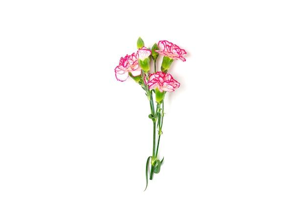白い背景の上に分離されたピンクのカーネーションの花の花束