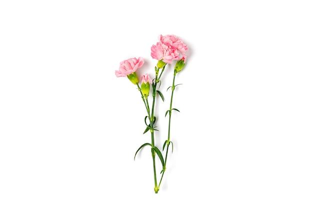 핑크 카네이션 꽃의 꽃다발 흰색 배경에 고립