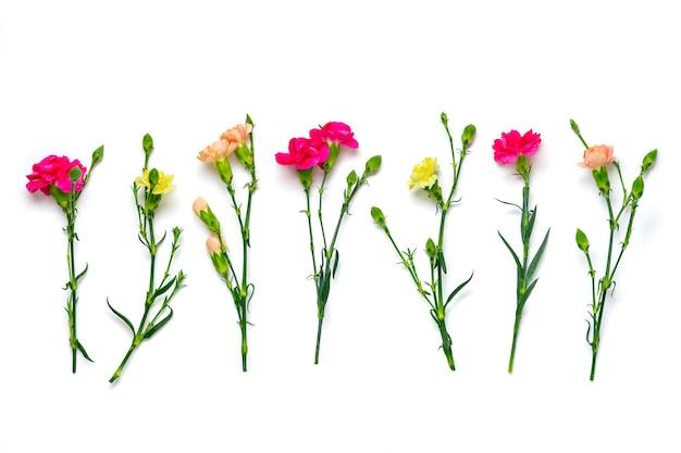 흰색 절연 핑크 카네이션 꽃의 꽃다발 프리미엄 사진
