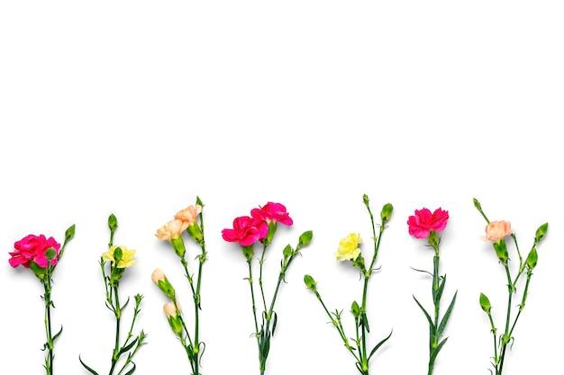 흰색 절연 핑크 카네이션 꽃의 꽃다발