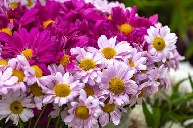 거리 시장에서 꽃에 핑크 카모마일 꽃의 꽃다발.