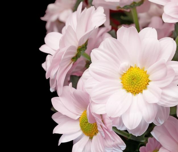 黒に分離されたピンクの菊の花束。 (閉じる)