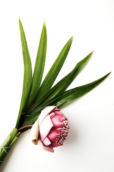 Букет из розовых лотосов