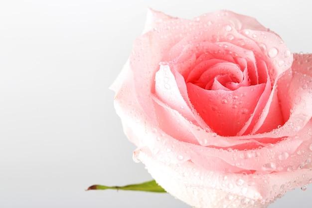 Букет из розовых роз, изолированные на светлом фоне