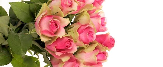 白のパノラマビューに分離されたピンクのバラの花束