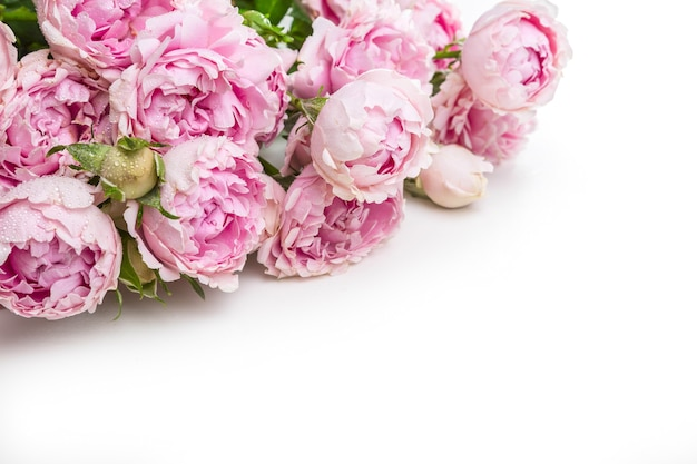 白い背景の上のピンクのバラの花束。美しい花。